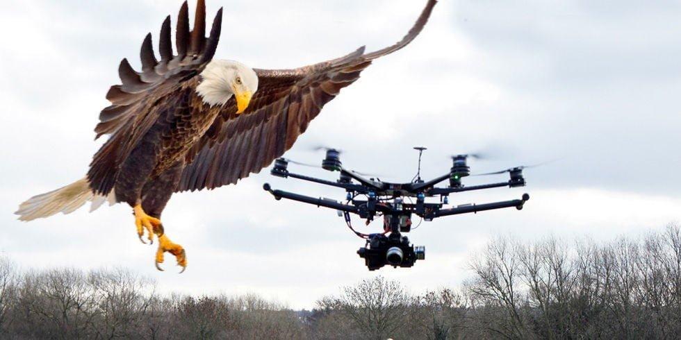 Drone'lara Kartal'lı Önlem